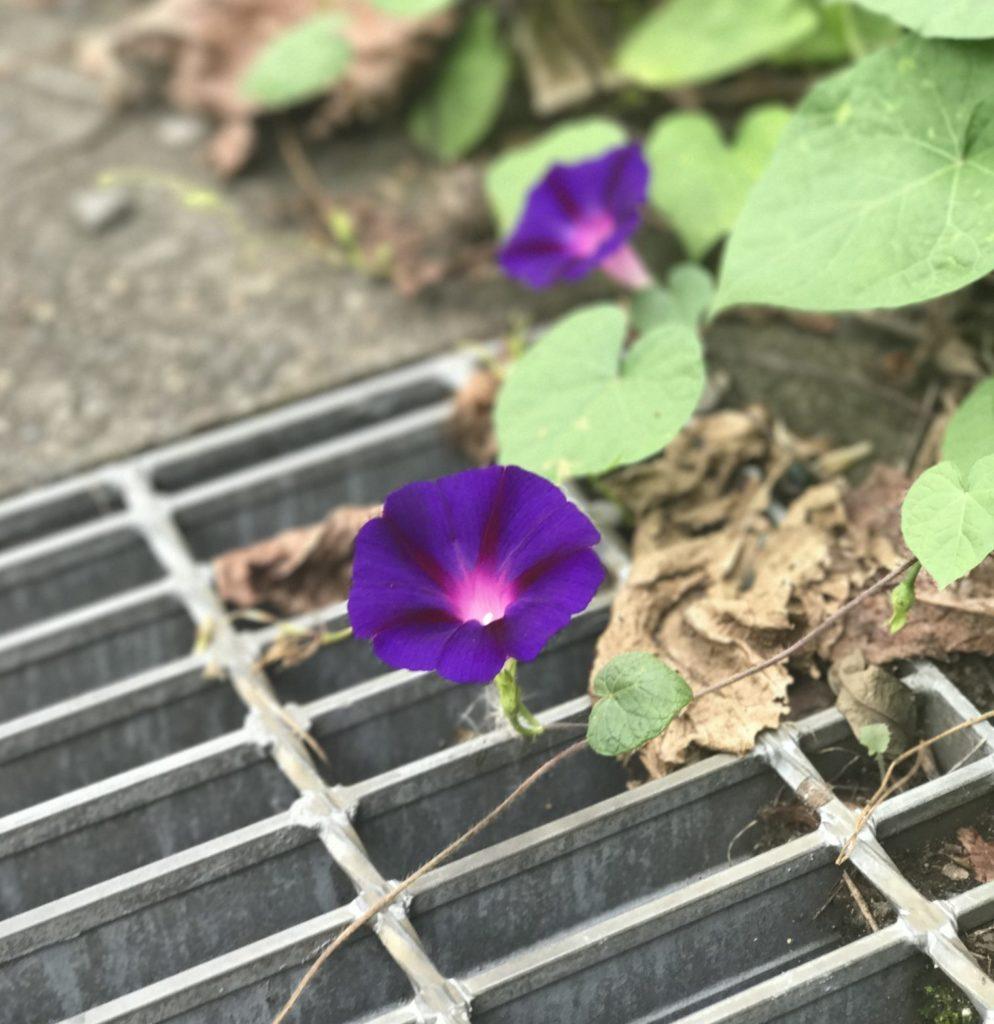 秩父への道路脇に咲く花