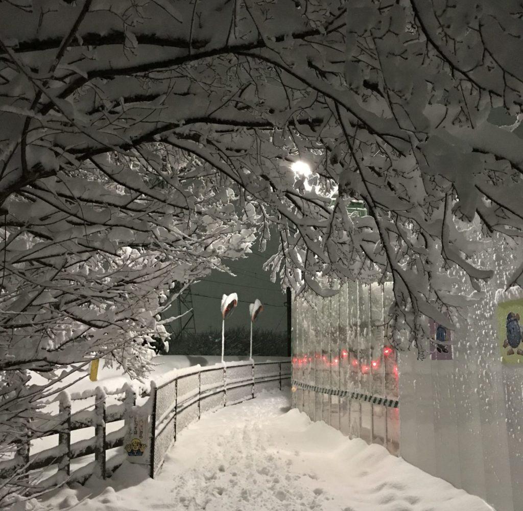 木々に積もった雪を眺めながらランニング