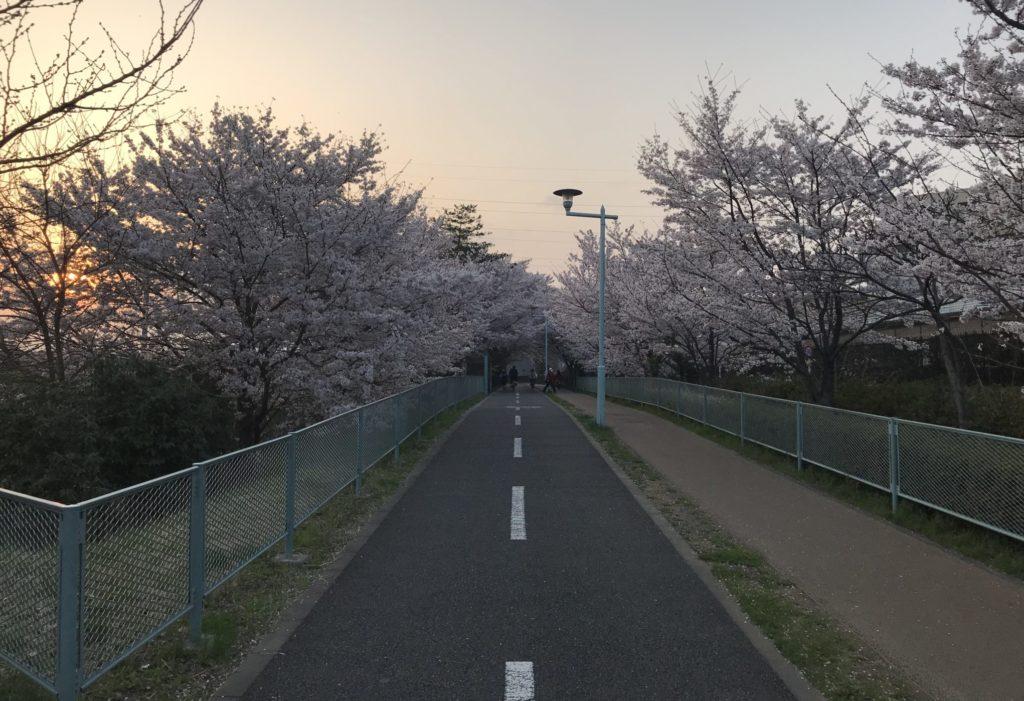 桜咲く多摩湖自転車道