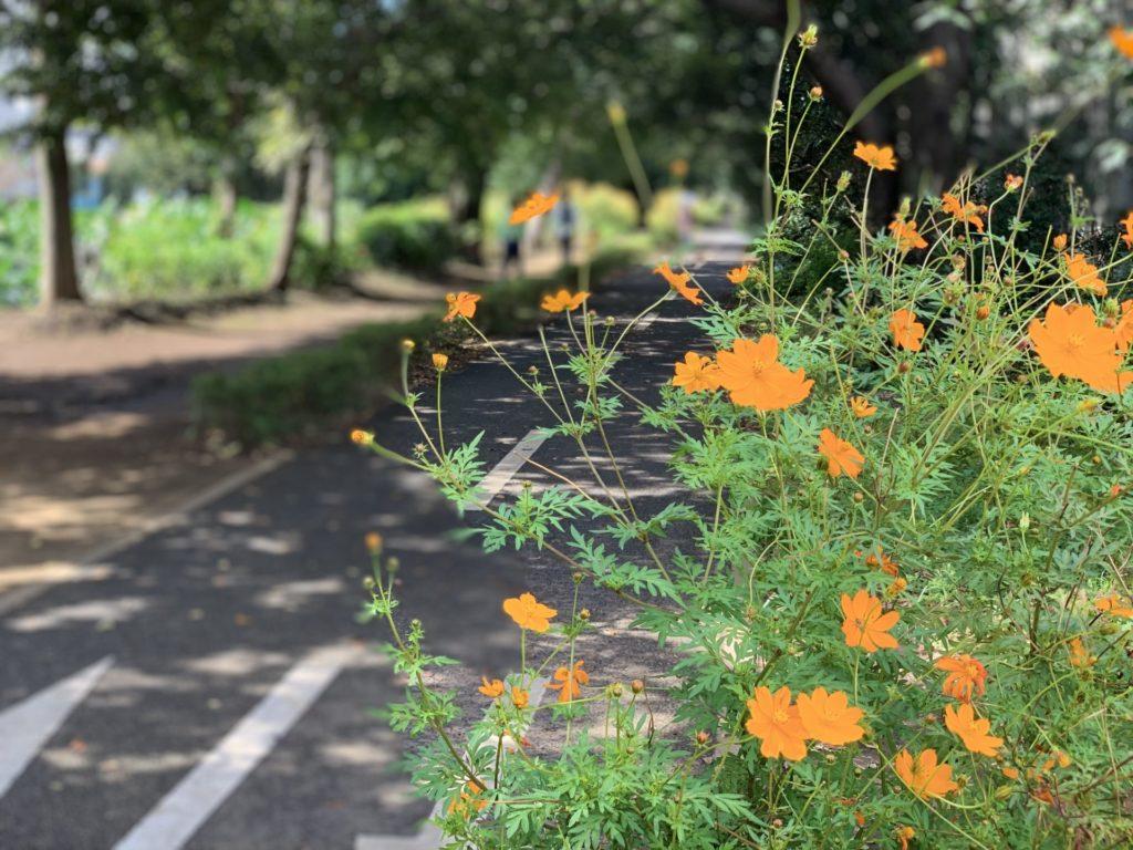 花々が拝める多摩湖自転車道