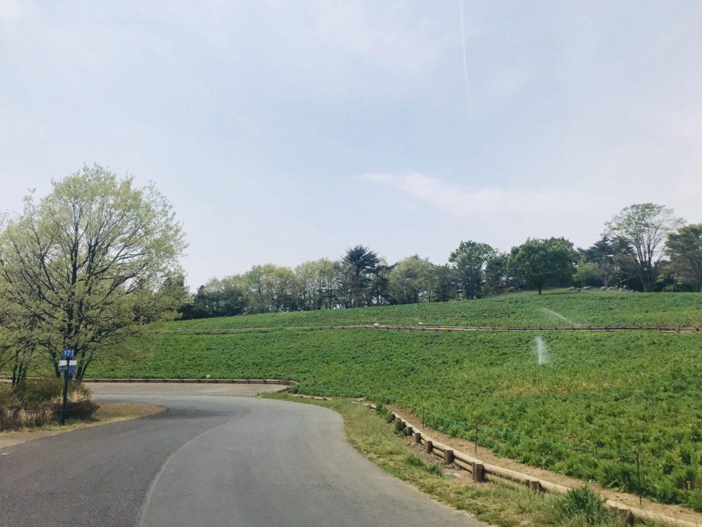 昭和記念公園の森のコース