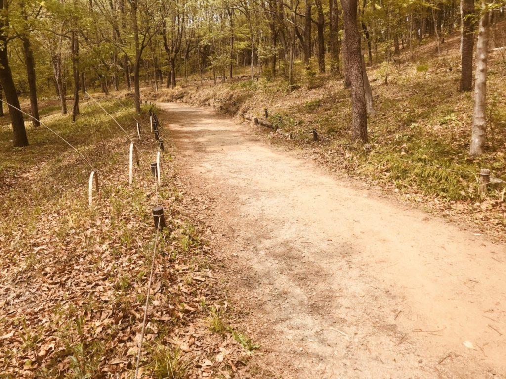 昭和記念公園「こもれびの丘」