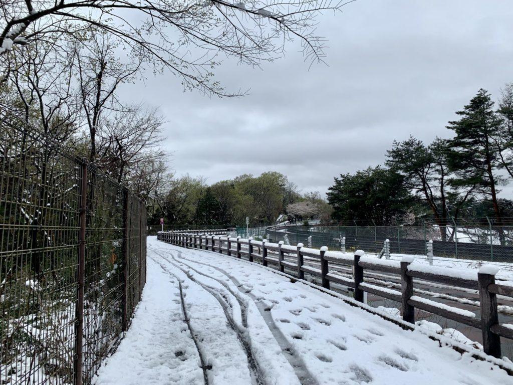新雪ランニング