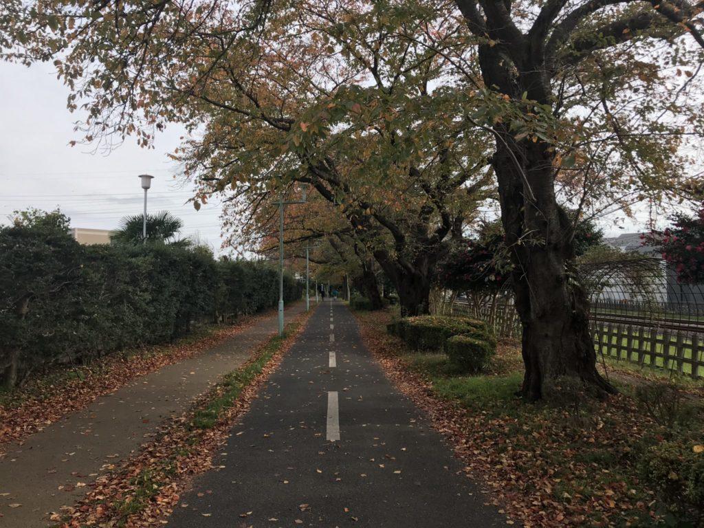 秋の多摩湖自転車道