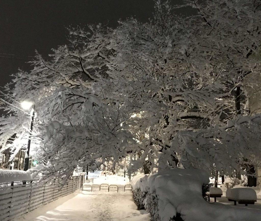 多摩湖自転車道で雪ランニング