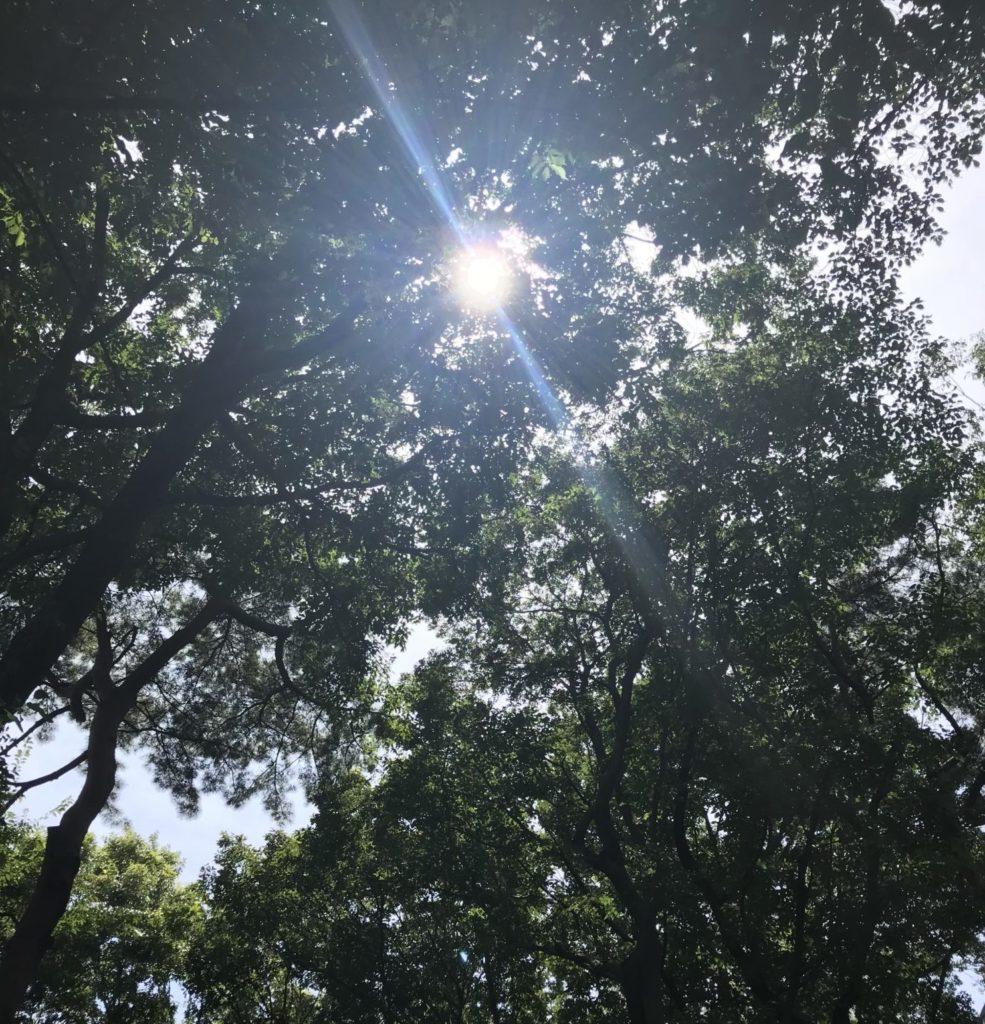 真夏ランニングで見上げた太陽