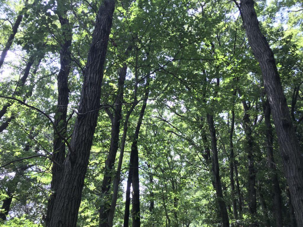 玉川上水ランニングで目にした木々