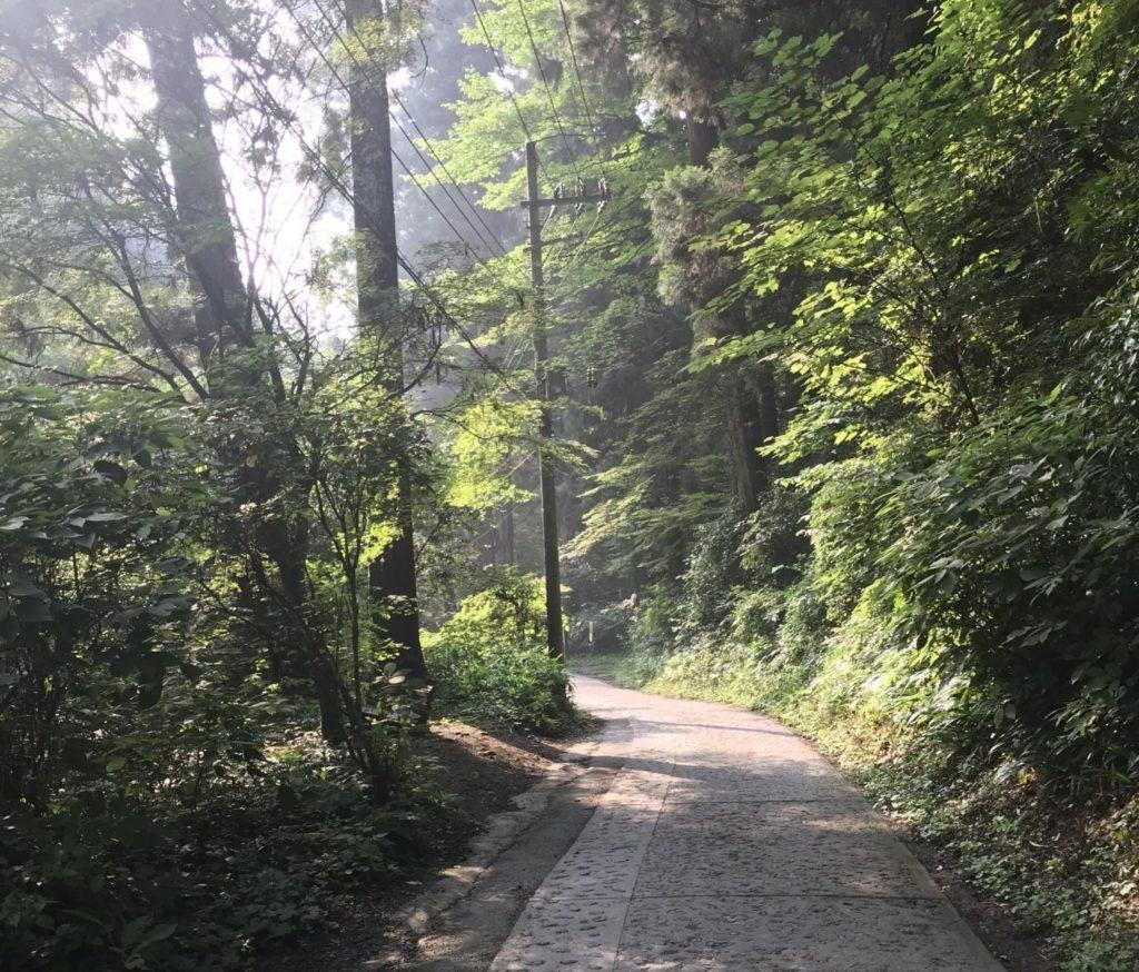 高尾山1号路をトレランで山頂へ