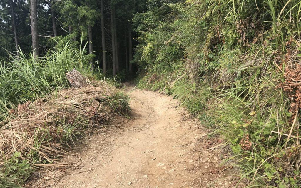 高尾山から陣馬山へトレイルランコース