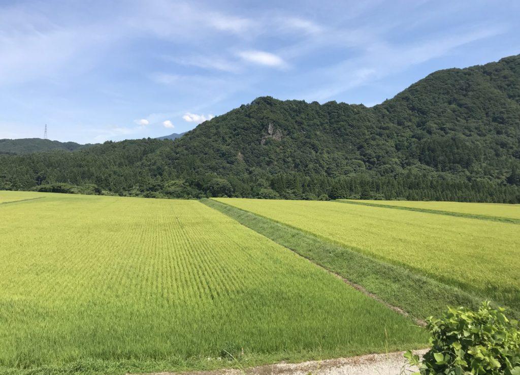 夏の赤谷線サイクリングロードから見る田園風景
