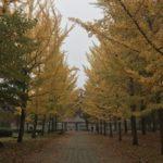 天童ラ・フランスマラソン会場の銀杏並木