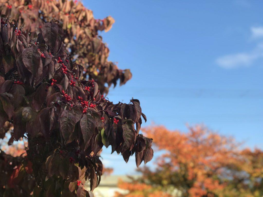 天童市で見つけた秋
