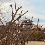 愛媛マラソン参加で松山城を観光