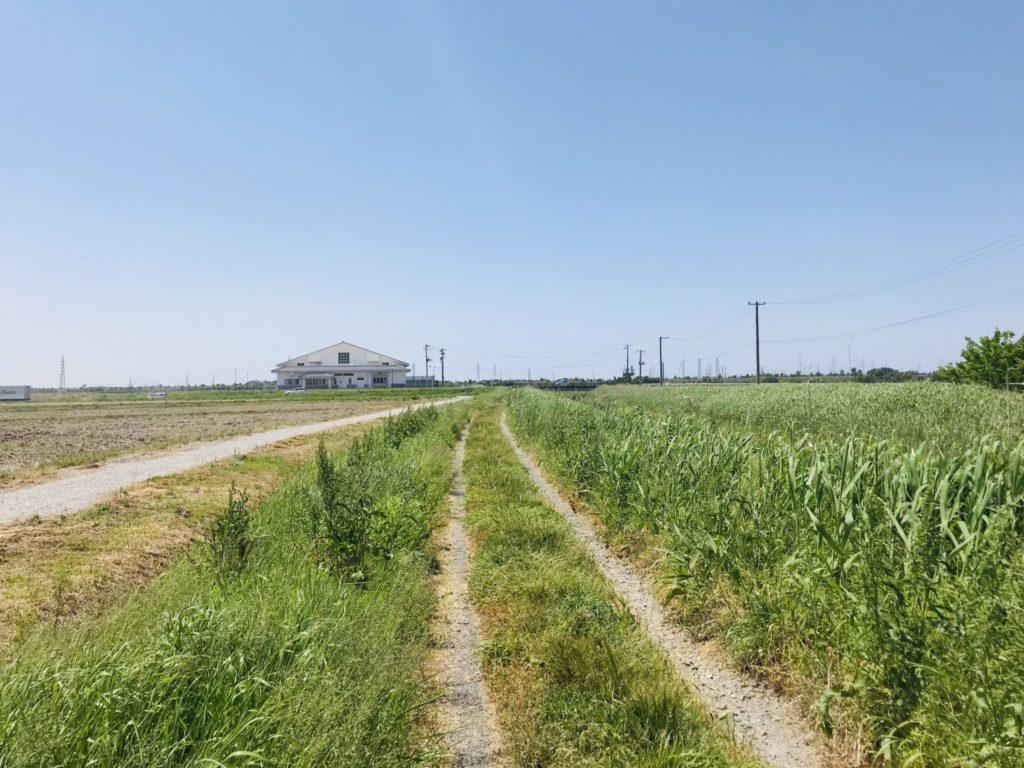 新潟の田んぼ道をランニング