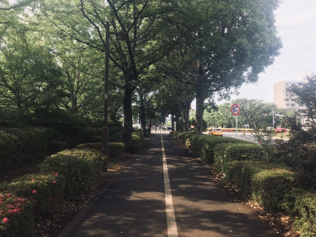 昭和記念公園外周コースは木陰が多い