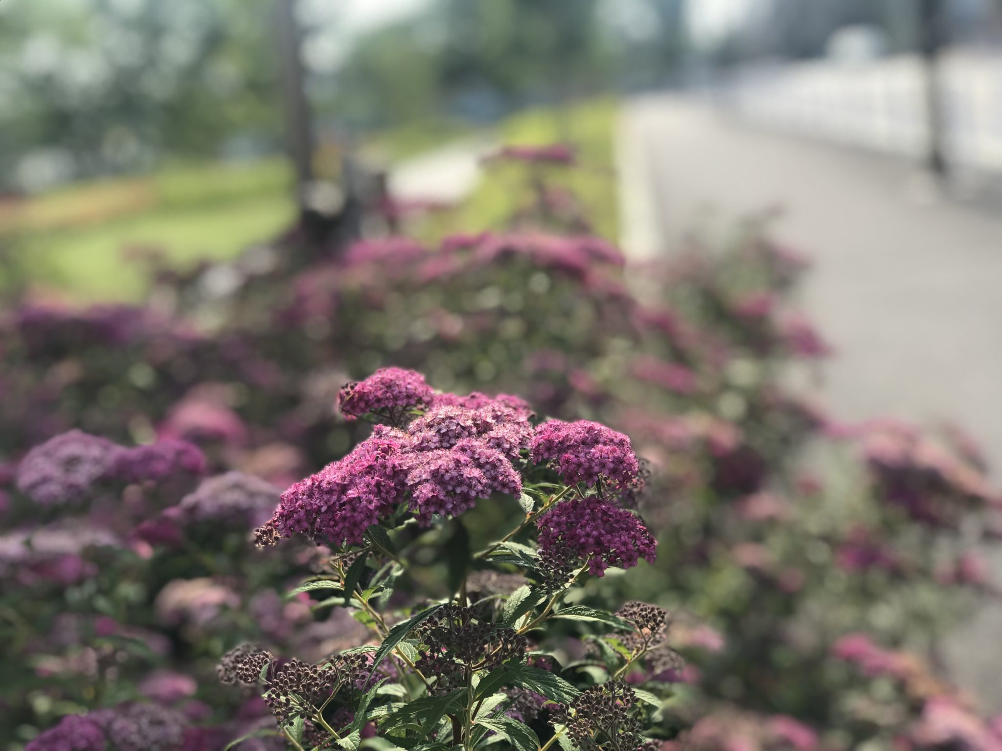 立川昭和記念公園の外周ランと花