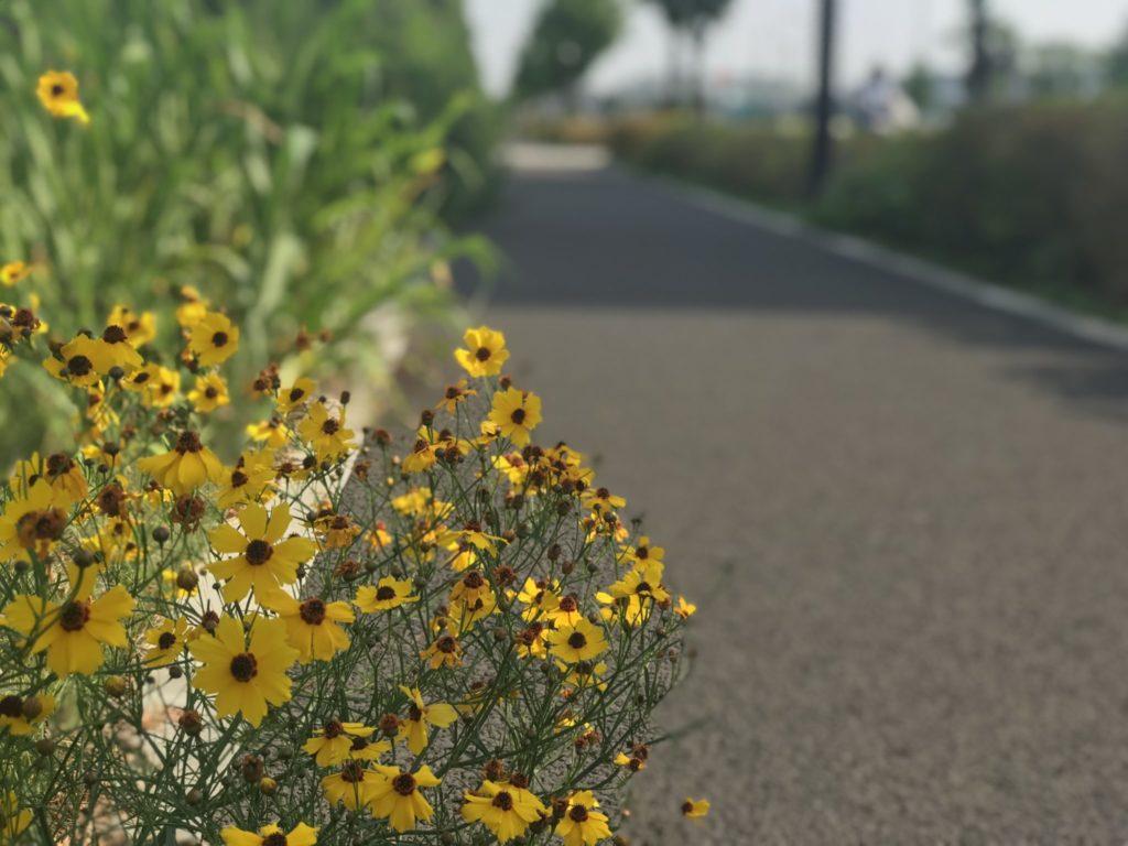 昭和記念公園外周コース脇の花々