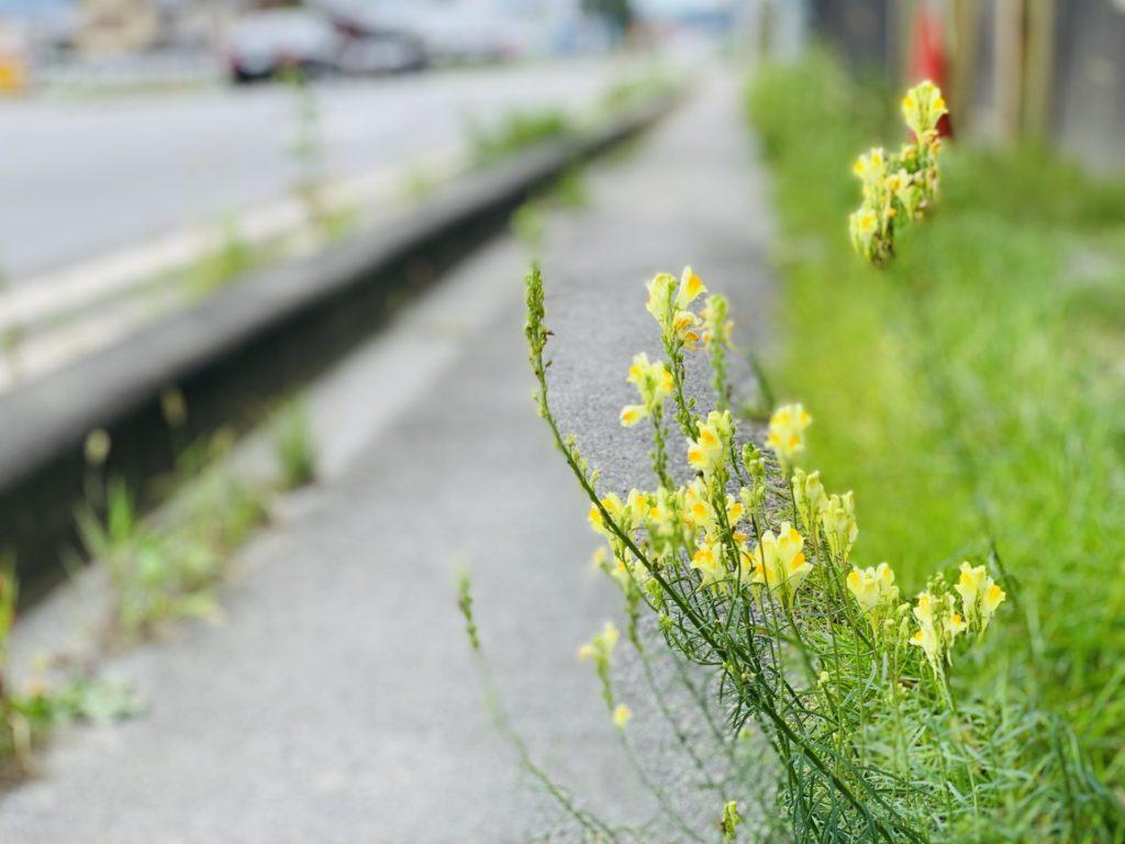 ウォーキングで見つけた花々