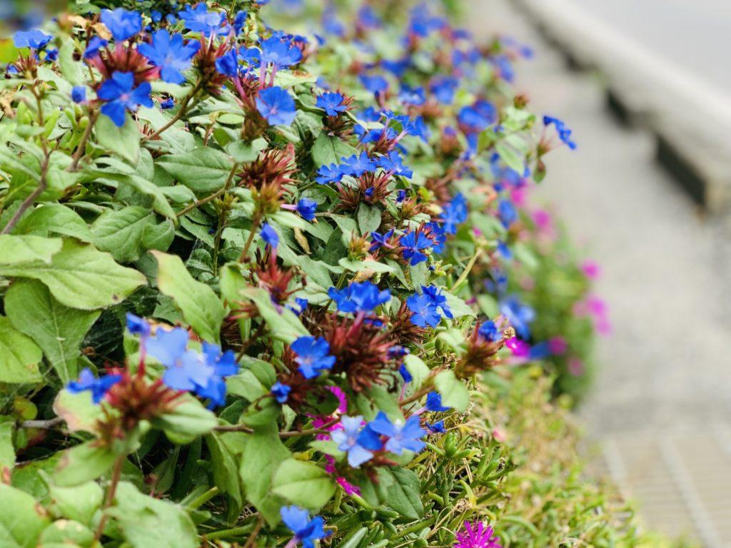 諏訪湖ランニングで見つけた花