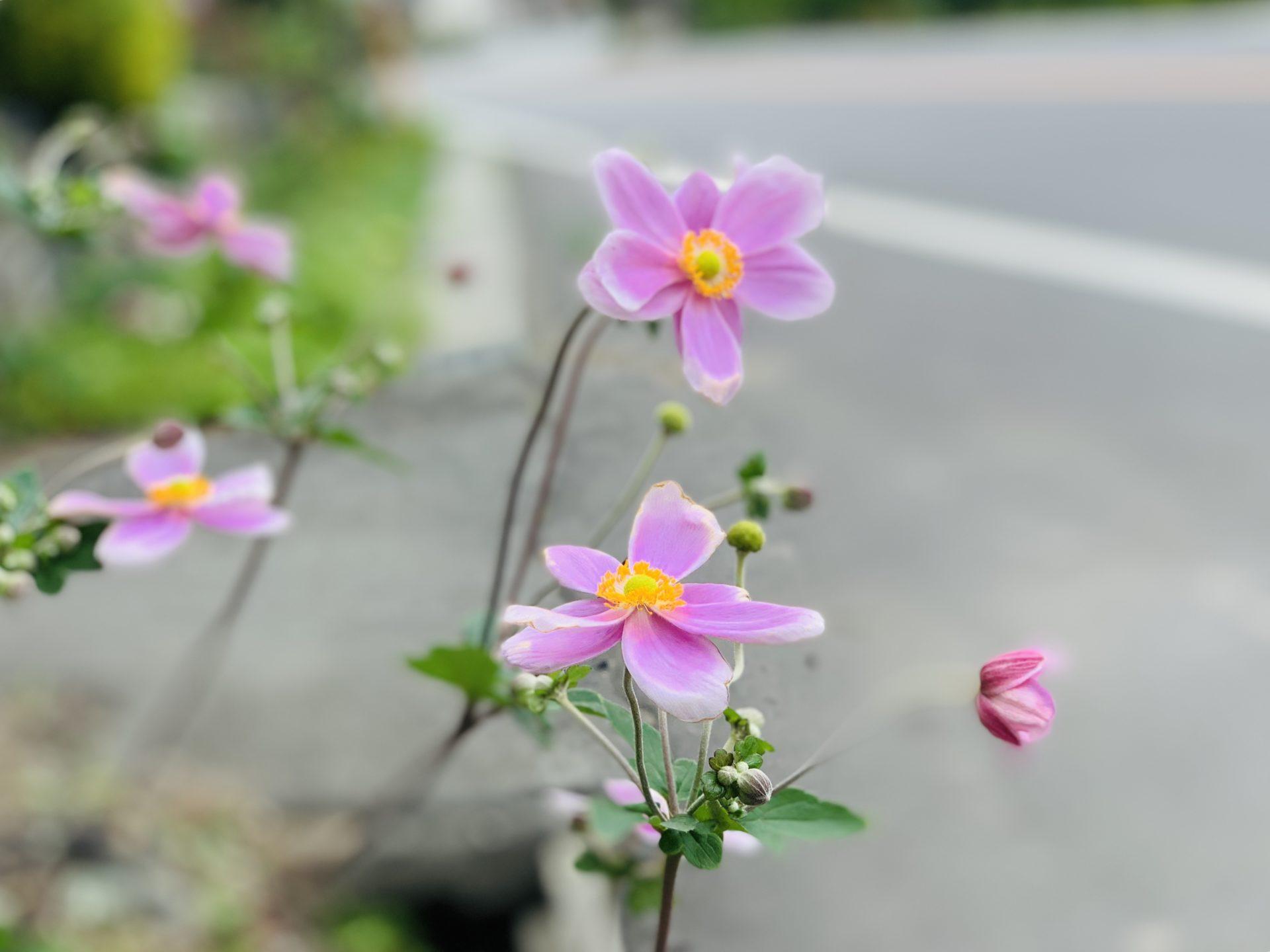 ランニングの沿道で見つけた花
