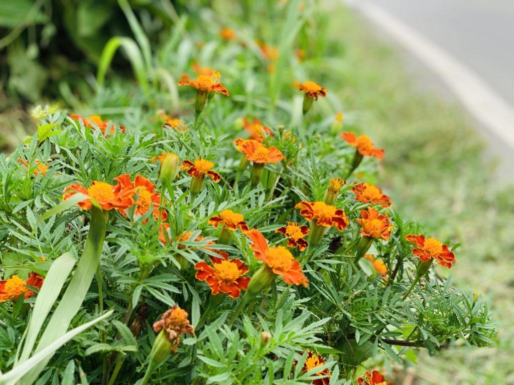ランニング途中で見つけた花