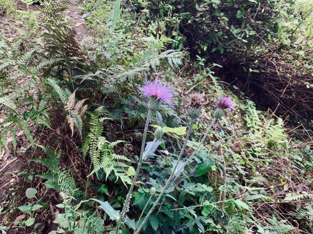 トレニックワールドのコース上から見た花