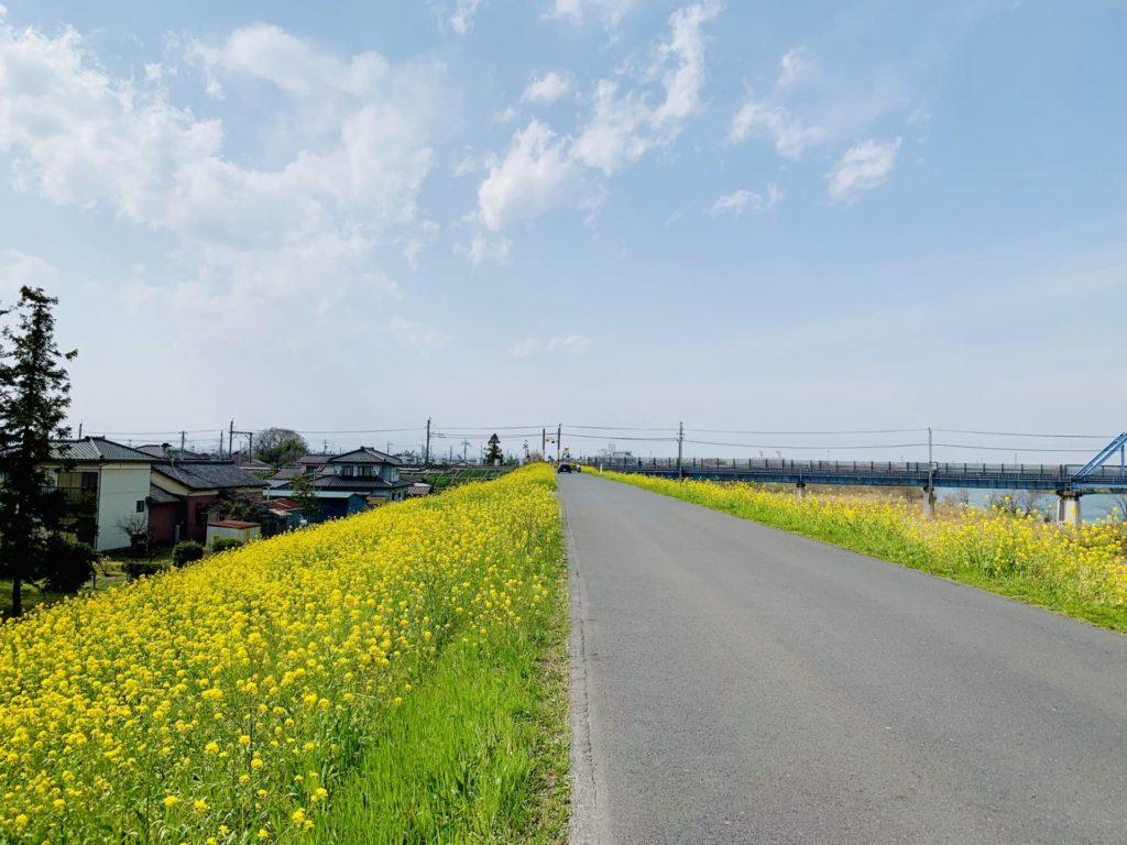 菜の花ランニングは荒川河川敷
