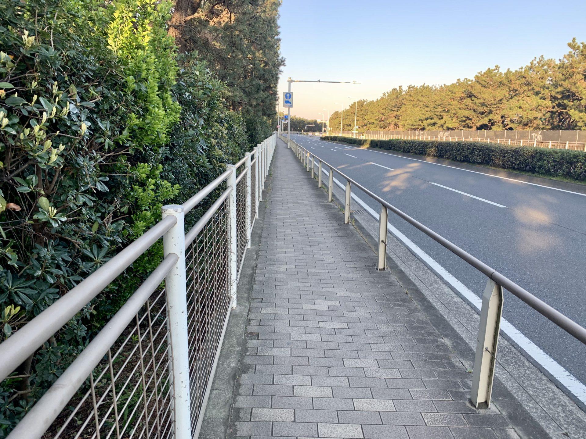 国道134号が湘南国際マラソンコース