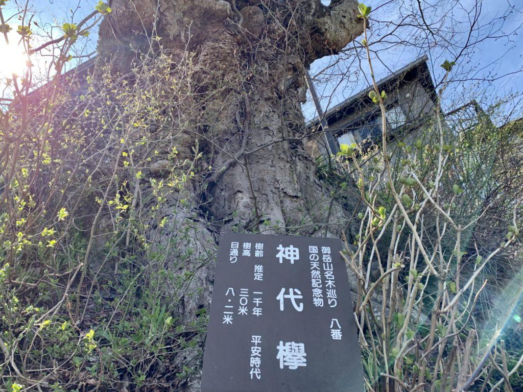 神代欅を仰ぎ坂道ラン