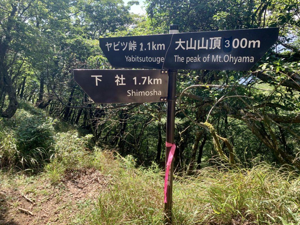 大山から鶴巻温泉へトレラン、看板あり