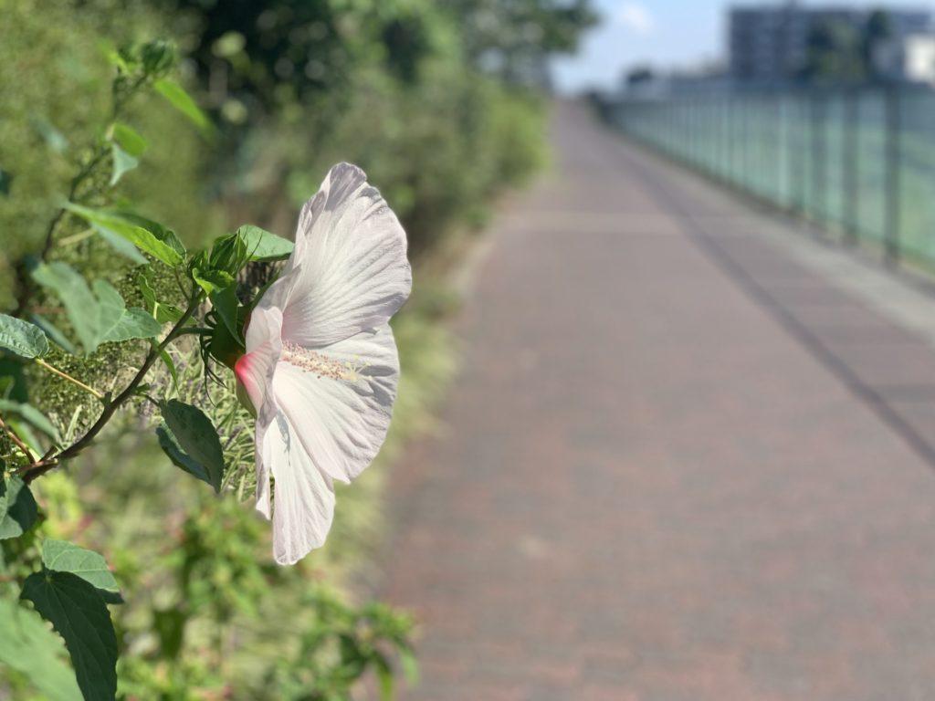 空堀川で見つけた一輪の花