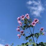 奈良散策で見つけた花
