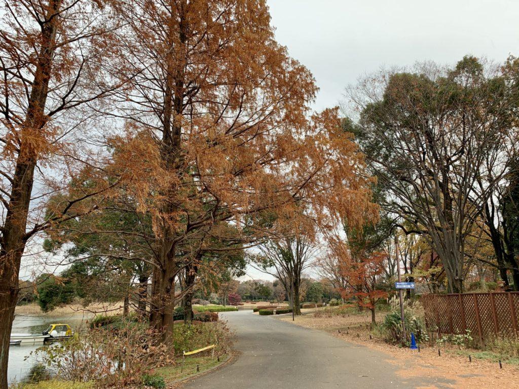 昭和記念公園内、仏のマラソン大会ごに見た紅葉