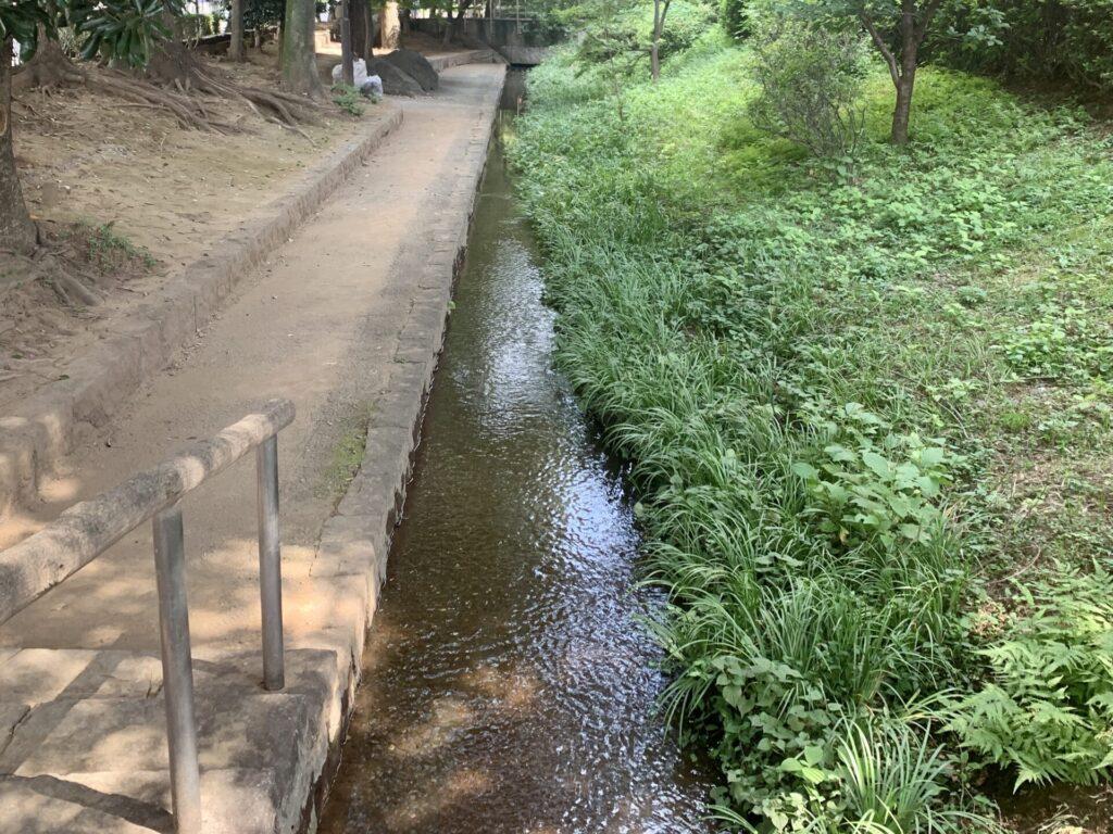 三鷹駅付近の玉川上水をランニング